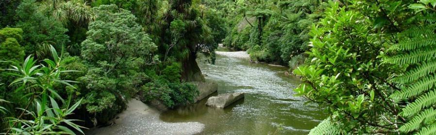 Paparoa National Park Charleston West Coast New Zealand